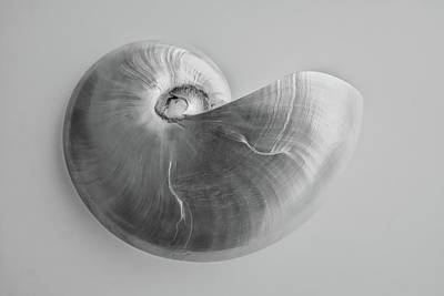 Photograph - Nautilus by Louise Lindsay