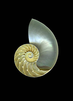 Repetition Mixed Media - Nautilus Nr.1 by Christian Slanec