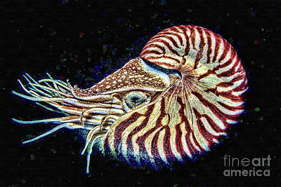 Painting - Nautilus by Olga Hamilton