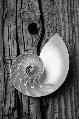 Knothole Photograph - Nautilus On Wooden Board by Garry Gay
