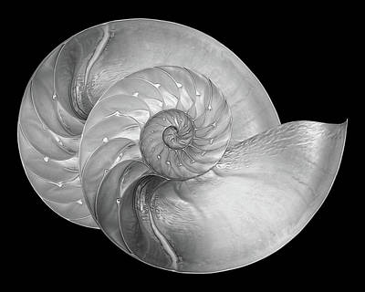 Photograph - Nautilus Pair In Mono - Horizontal by Gill Billington