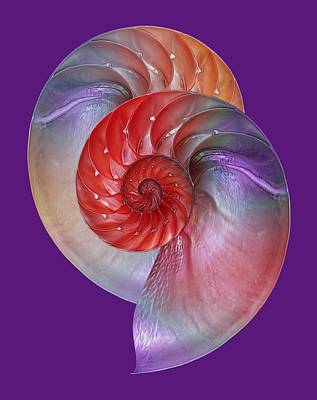 Nautilus Passion Art Print by Gill Billington