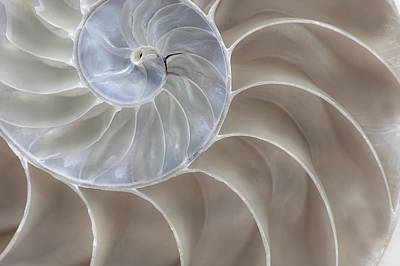 Art Print featuring the photograph Nautilus Shell II by John Hix