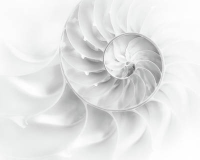 Spiral Wall Art - Photograph - Nautilus Shell In High Key by Tom Mc Nemar