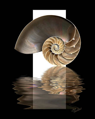 Digital Art - Nautilus Shell by Judi Quelland