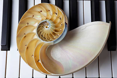 Piano Keys Photograph - Nautilus Shell On Piano Keys by Garry Gay