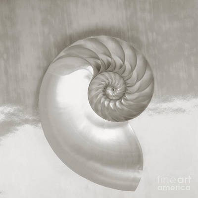 Photograph - Nautilus Spiral by Kate Turning & Tom Gibson - Printscapes