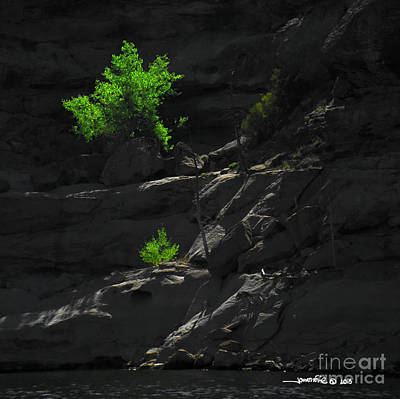 Photograph - Navajo Lake Tree by Jonathan Fine