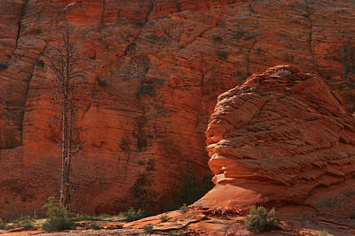 Photograph - Navajo Sandstone by Inge Riis McDonald