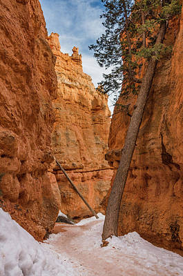 Photograph - Navajo Trail Tree by Greg Nyquist