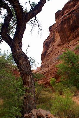 Photograph - Near Moab 2 by Marty Koch