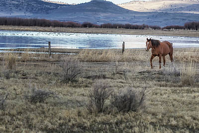 Photograph - Nearing A Friend by Belinda Greb