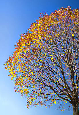 Photograph - Nearing The End Of Fall by Carolyn Derstine