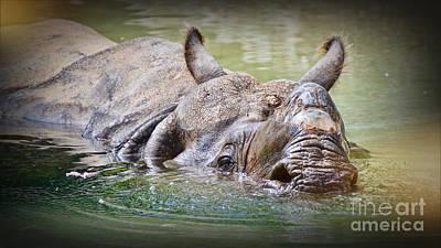 Photograph - Nearly Extinct by Judy Kay