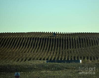 Photograph - Nebraska Corn Rows by Mark McReynolds