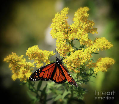 Photograph - Nebraska's Goldenrod by Elizabeth Winter
