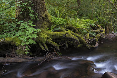 Photograph - Necarney Creek by Robert Potts
