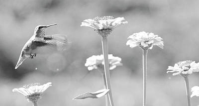Photograph - Nectar Black And White by Steve McKinzie