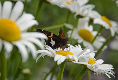 Photograph - Nectar by Fred Lassmann