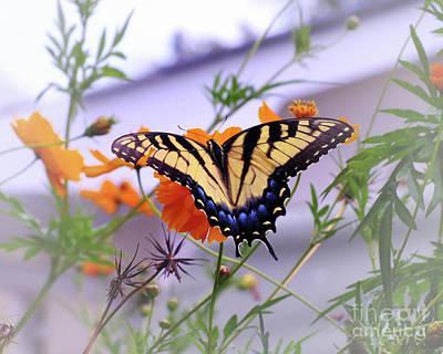 Photograph - Nectar Hunter by Scott Cameron