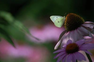 Photograph - Nectar Of The Gods by Tana Reiff
