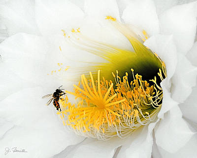 Photograph - Nectar With A Side Of Pollen by Joe Bonita