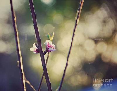 Photograph - Nectarine Blooms by Susan Bordelon
