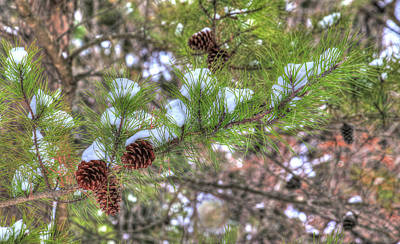 Photograph - Needles And Cones by J Laughlin