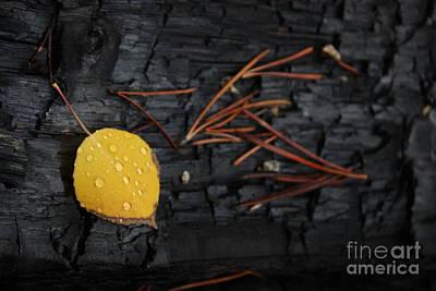 Photograph - Needlework by Brian Boyle