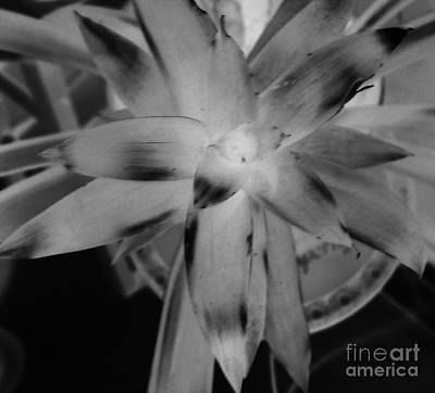 Negative Bromeliad Art Print by Emily Kelley