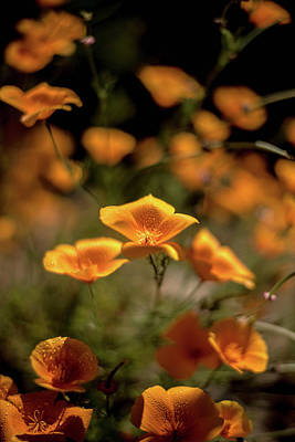 Photograph - Neighborhood Poppies by Wendy Carrington