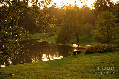 Photograph - Neighborhood Tranquility by Lori Mellen-Pagliaro