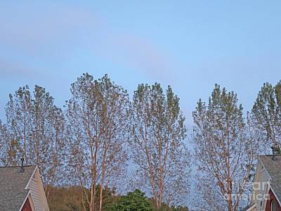 Photograph - Neighborly Tree Line by Ann Horn