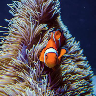 Photograph - Nemo by William Bitman