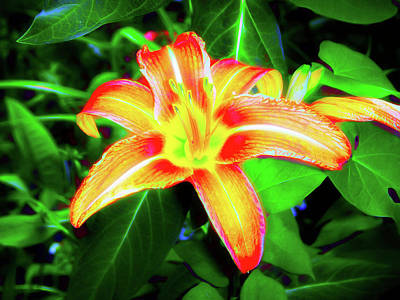Photograph - Neon Colors Orange Lily by Aimee L Maher Photography and Art Visit ALMGallerydotcom