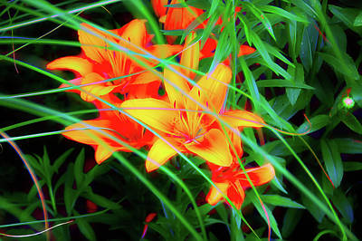 Photograph - Neon Colors Orange Tiger Lilies by Aimee L Maher Photography and Art Visit ALMGallerydotcom