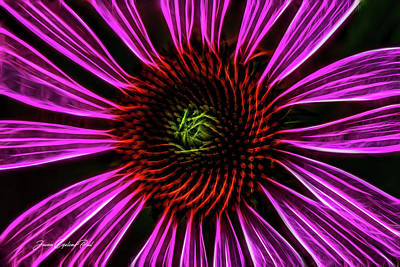 Photograph - Neon Cornflower by Joann Copeland-Paul