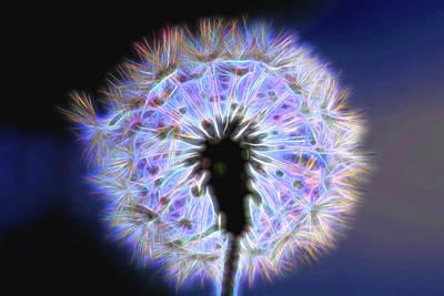 Photograph - Neon Dandelion Fire by Kay Brewer
