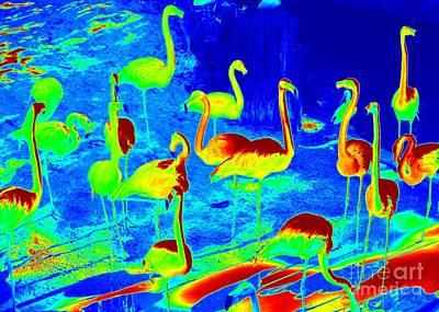 Photograph - Neon Flamingos by Carol Groenen