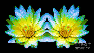 Photograph - Neon Glow Mirrored Water Lilies by Rose Santuci-Sofranko