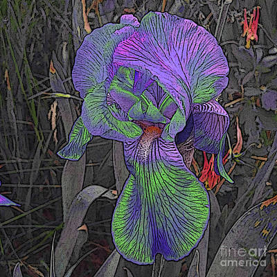 Photograph - Neon Iris With Wild Columbines by Conni Schaftenaar