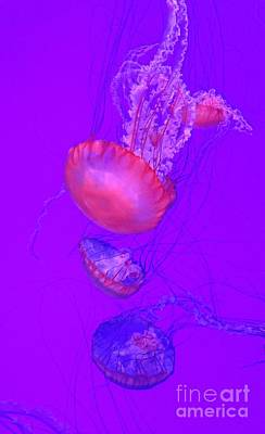 Surrealism Royalty-Free and Rights-Managed Images - Neon Jellyfish by John Malone