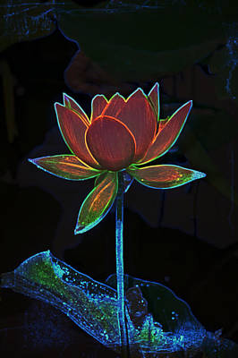 Photograph - Neon Lotus  by Gini Moore