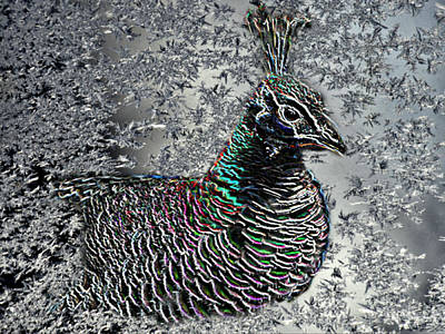 Photograph - Neon Peahen On Ice by Kathy M Krause