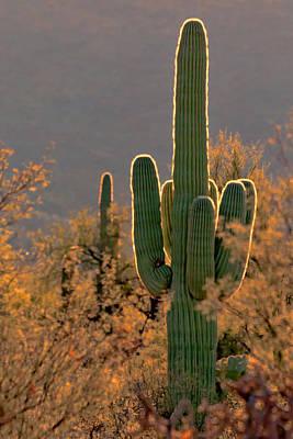 Photograph - Neon Saguaro #2 by Susan Rissi Tregoning