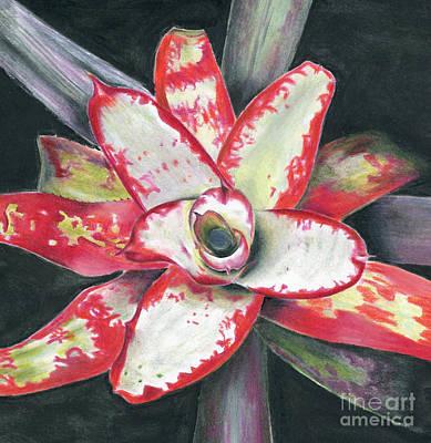 Painting - Neoregelia 'blastoff' by Penrith Goff