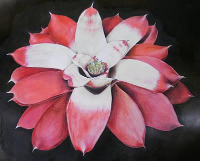 Neoregelia Painting - Neoregelia Madam President by Penrith Goff