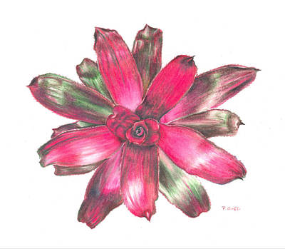 Neoregelia Painting - Neoregelia Puppy Love by Penrith Goff