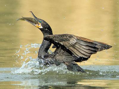Photograph - Neotropic Cormorant 0997-111217-1cr by Tam Ryan