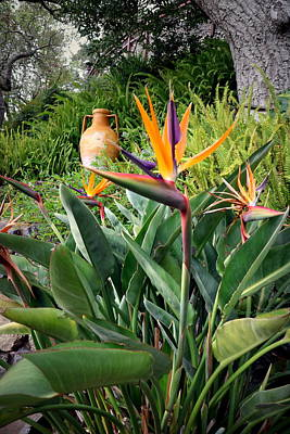 Photograph - Nepenthe Bird Of Paradise by Joyce Dickens
